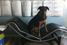 architecture Firms with Dogs