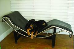 architects office dog